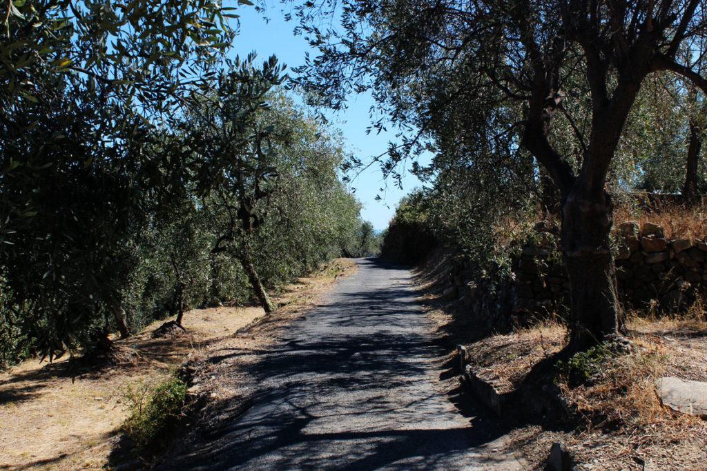 Olio di oliva Imperia